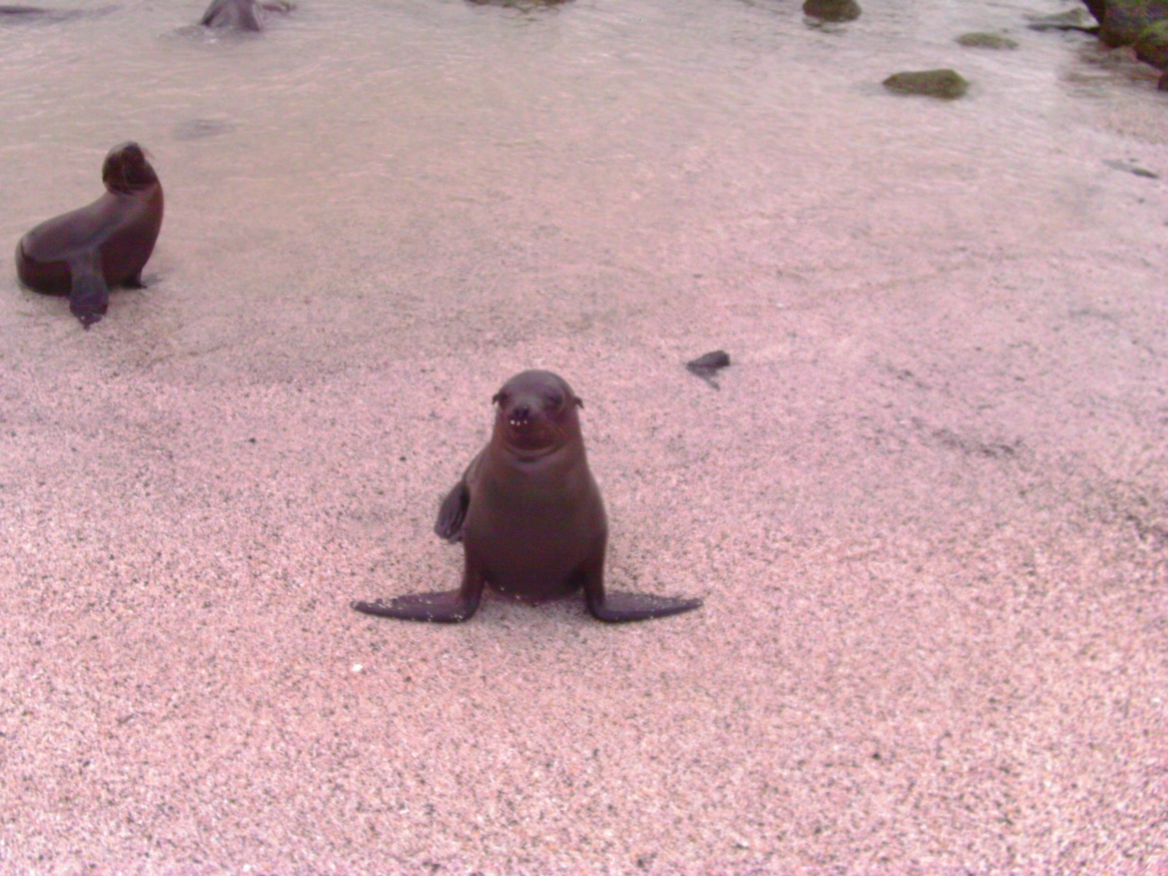 In Galapagos, the animals aren't afraid of humans. Photo credit: L. Tripoli