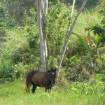 Belize Photo credit: M. Ciavardini