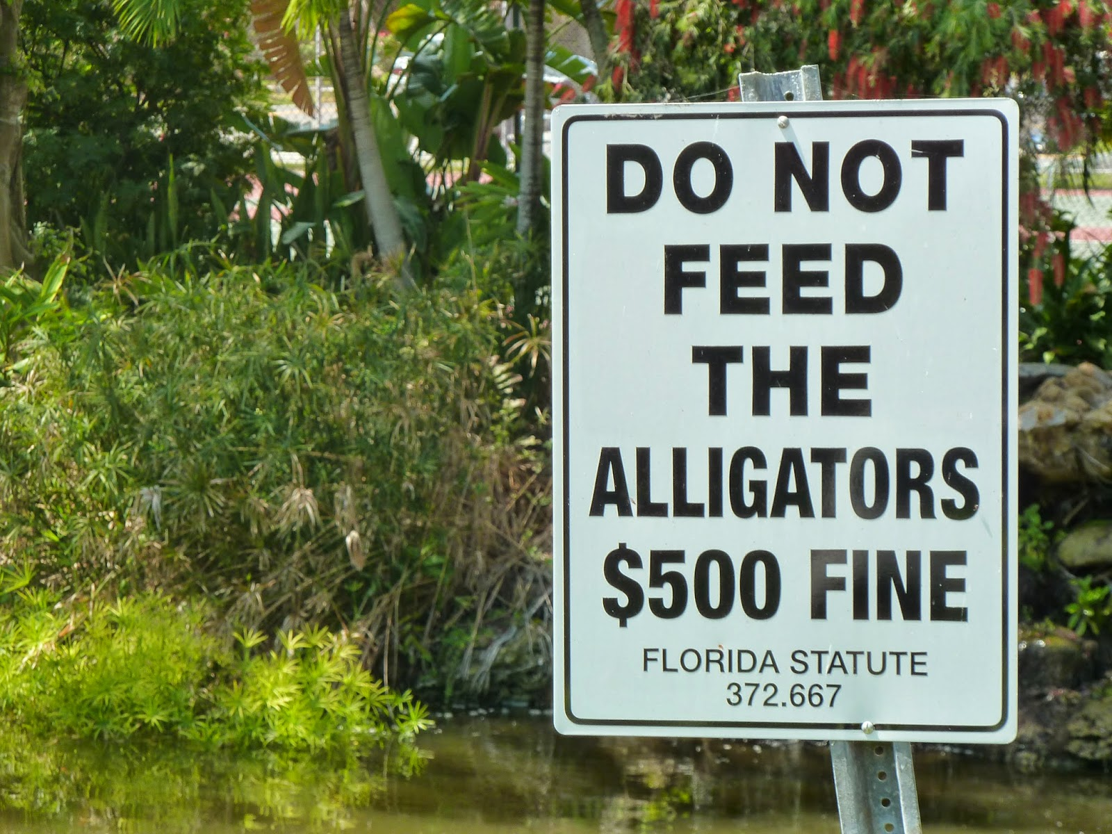A sign in Sanibel, Fla. warning people not to feed the alligators. Photo credit: M. Ciavardini