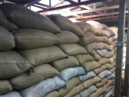 Coffee beans ready for shipment at Doka Estate, in Alajuela, Costa Rica. Photo credit: M. Ciavardini