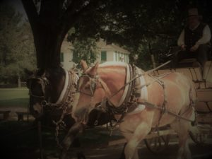 Stagecoach rides are available at Old Sturbridge Village in Massachusetts. Photo credit: M. Ciavardini