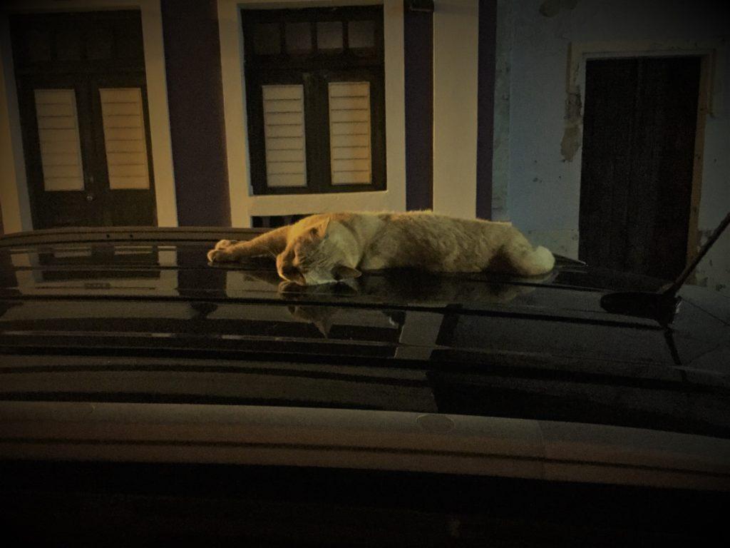 #MondayFunDay Cat on a Hot Tin Roof