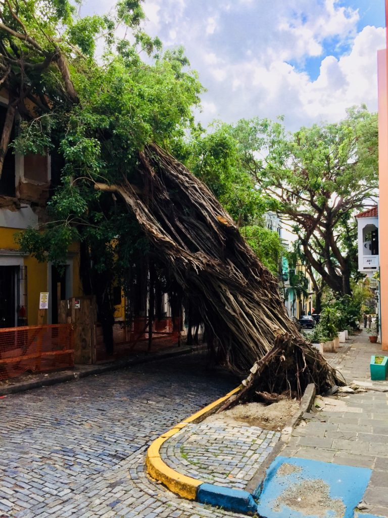 Although some downed vegetation remains, Old San Juan is very walkable for tourists. This photograph was taken on Nov. 17, 2017. Photo credit: M. Ciavardini.