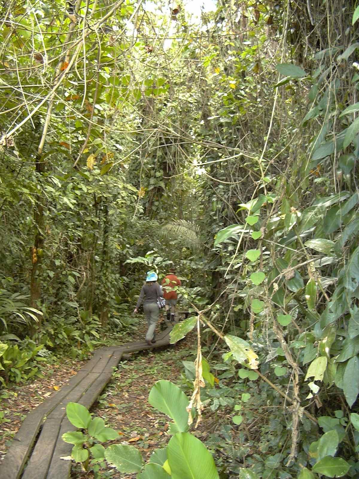 Lori and Mike walking thru the jungle P1000728 (2).jpg
